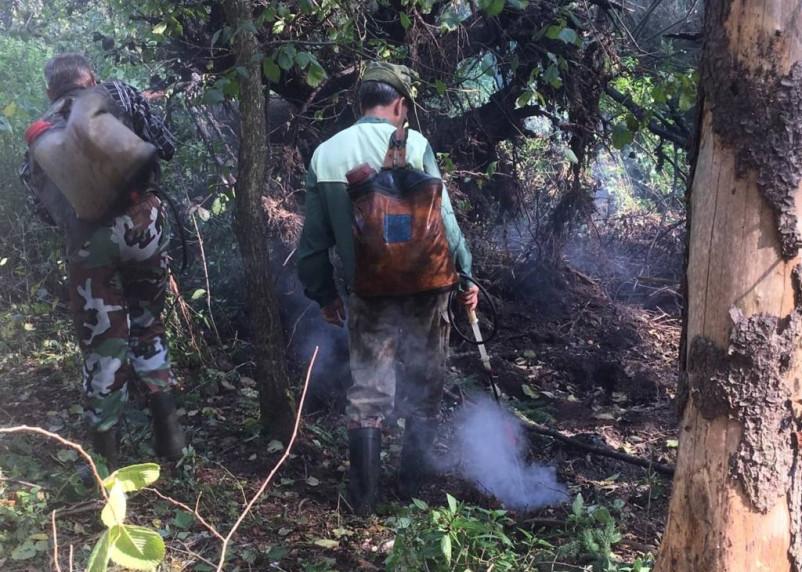 В Демидовском районе горел лес