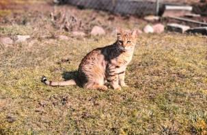 В России разрабатывают вакцину от коронавируса для кошек