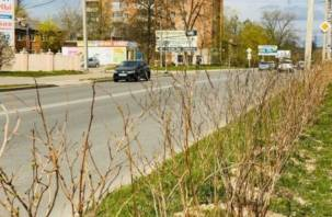 Одну из улиц Заднепровья украсил «зеленый забор»