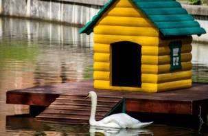 В Лопатинском саду обновили домики для лебедей