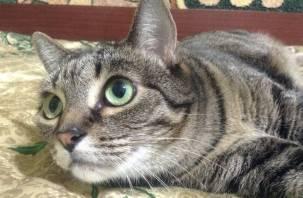 Что в эпоху COVID-19 грозит смоленским кошкам и собакам
