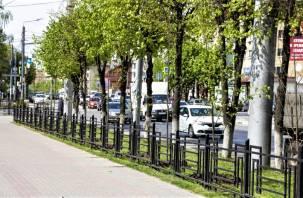 Вдоль улицы Кирова в Смоленске высадили молодые липы