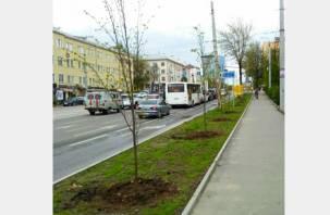 В Смоленске на проспекте Гагарина высадили аллею из лип
