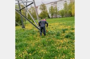 В Смоленске объявили войну борщевику