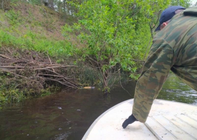 В СК рассказали о поисках 11-летнего в Смоленской области. Ребенка нашли мертвым