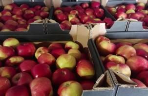 20 тонн яблок задержали смоленские пограничники в Руднянском районе