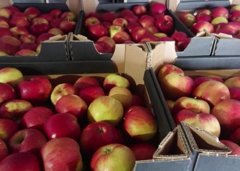 Под видом утеплителя пытались ввезти яблоки и груши в Смоленскую область