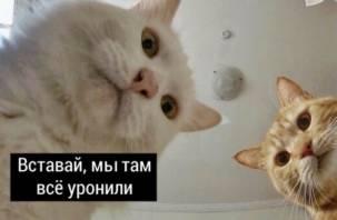 Фразу из мема про Наташу и котов запатентуют