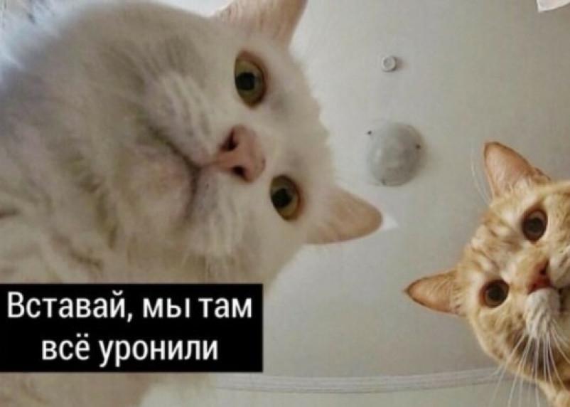 «Наташа, вставай!». Песня про котов, которые всё уронили, стала вирусной