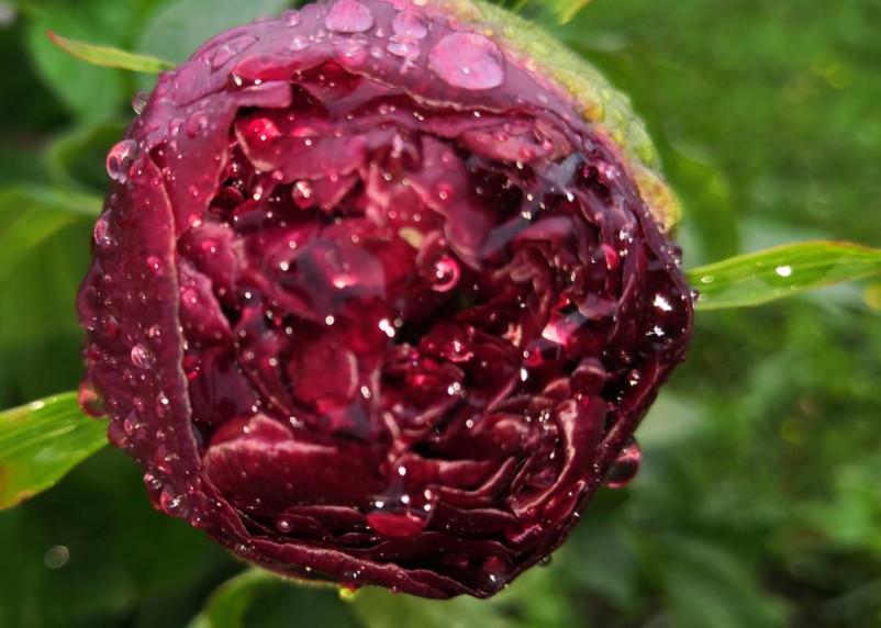 Какие домашние растения заряжают знаки зодиака энергией