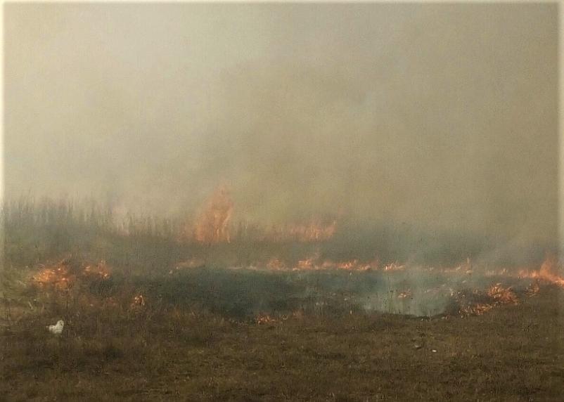 Смоленская область попала в список регионов, где недостаточно обеспечивают защиту от лесных пожаров