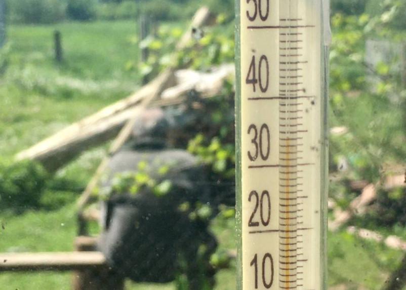 Россиян предупредили о наступлении второй волны аномальной жары