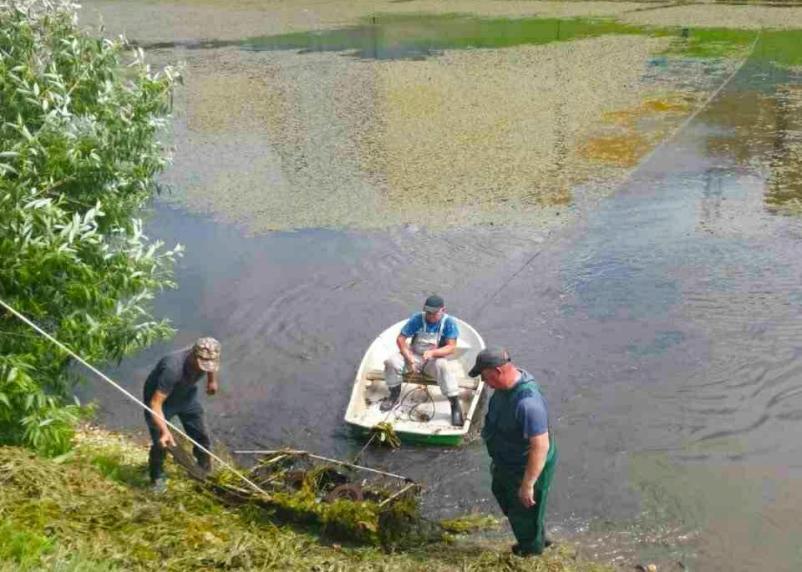 Болото в Парке 1100-летия Смоленска решили почистить