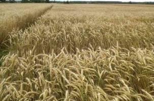 Смоленские аграрии скоро дойдут до «Грани»
