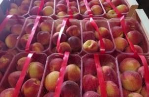 Смоленские таможенники задержали фуру с «левыми» номерами и нелегальными овощами и фруктами