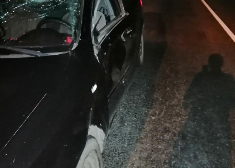 В Смоленском районе легковушка столкнулась с  лосем
