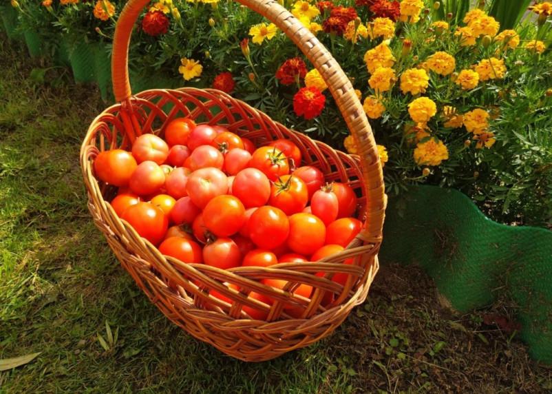 На российских прилавках исчезнут азербайджанские томаты