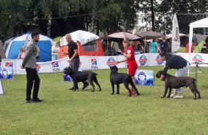 В Смоленске прошла выставка собак