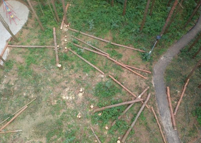 В Дорогобуже вновь принялись вырубать рощу, чтобы построить спортивную площадку