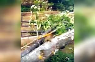 Рухнуло на могилы. Старое дерево повредило ограды на смоленском кладбище