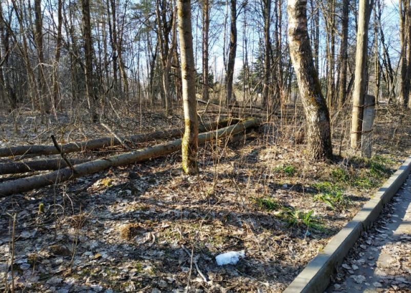 В Смоленске займутся деревьями в Реадовском парке