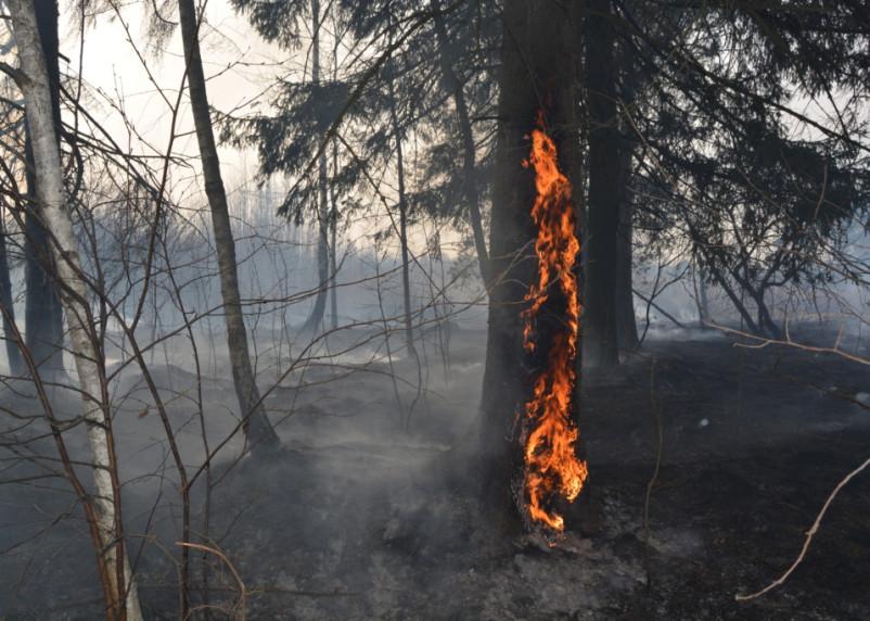 В Смоленской области подсчитали количество лесных пожаров в сезон