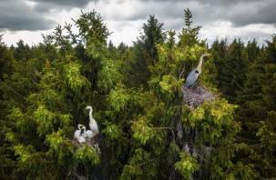 Работа смоленского фотографа стала лучшей в международном конкурсе Drone Photo Awards 2020