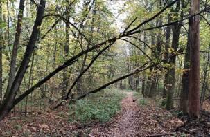Реадовский парк в Смоленске завален буреломом