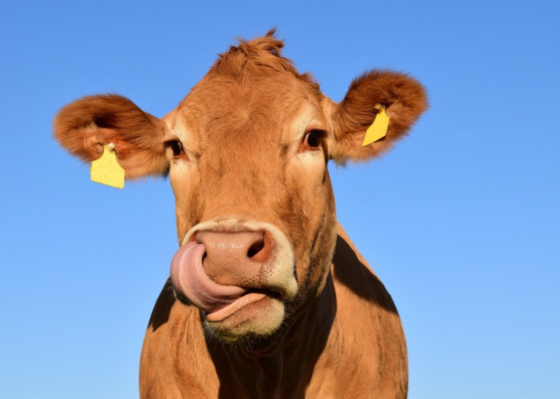 Смоленское молоко на 97% реализуют высшим сортом