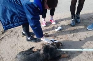 Сотрудники МЧС спасли собаку с капканом на голове в Смоленской области