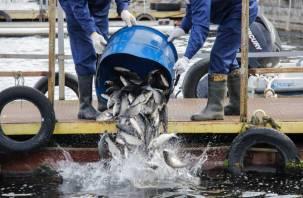 Смоленская АЭС: более 23 млн рублей направлено на охрану окружающей среды