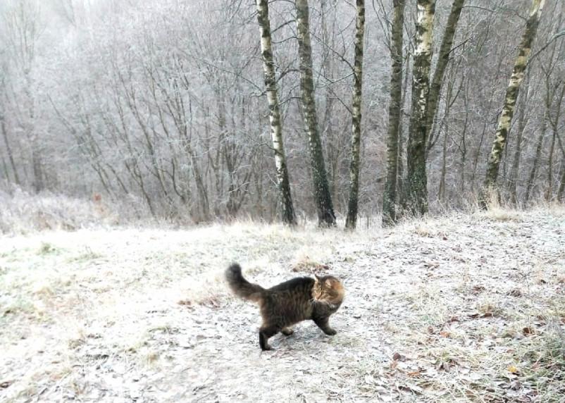 Прихватите завтра зонт. В Смоленской области ожидается снег с дождем