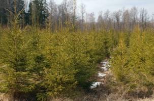 Семь тысяч гектаров леса восстановлено в Смоленской области