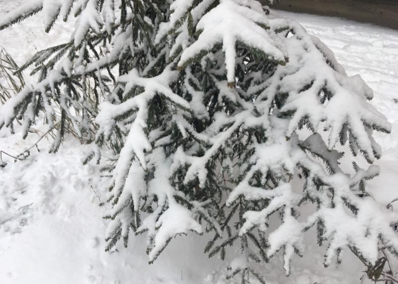 124 новогодних рейда провели патрули в лесах Смоленщины