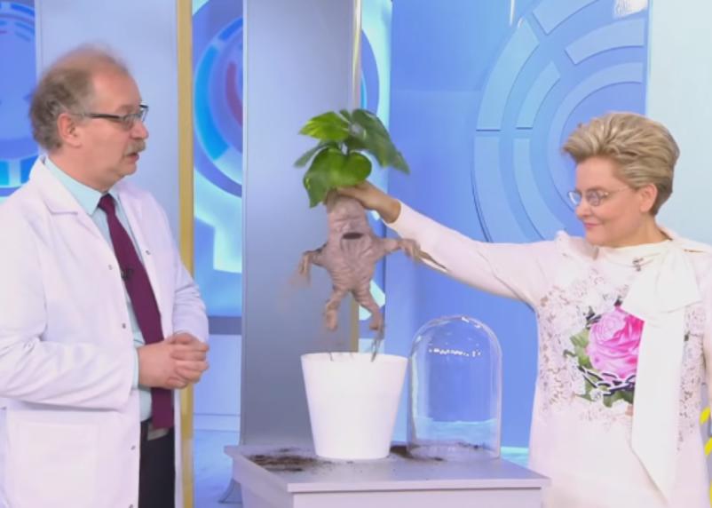 Малышева назвала самые опасные комнатные растения
