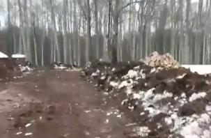 В Смоленской области опровергли массовую вырубку в национальном парке