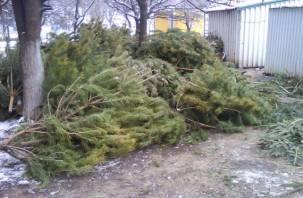 Выброшенные новогодние елки и сосны направят на переработку