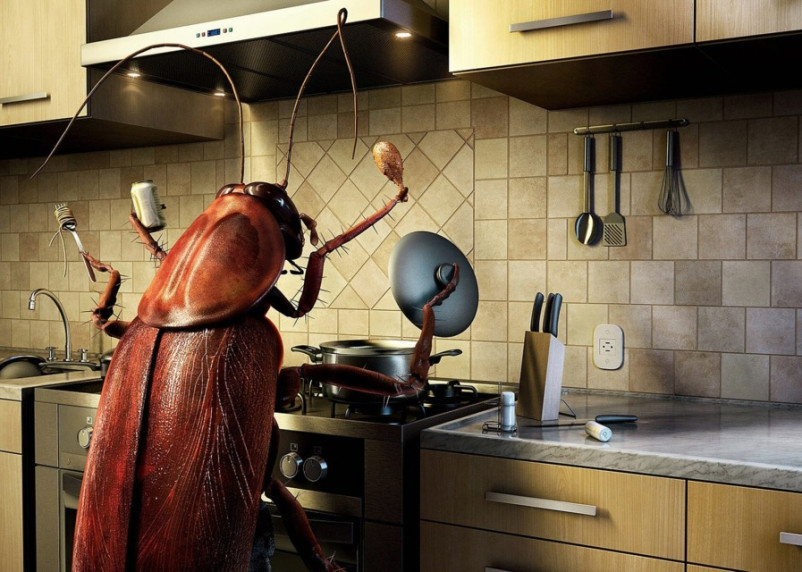 Россиян ожидает нашествие тараканов