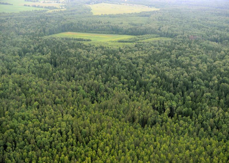 В Смоленской области собрали почти полмиллиарда рублей за использования лесов