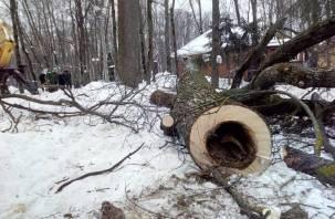 В Лопатинском саду приступили к кронированию и сносу деревьев