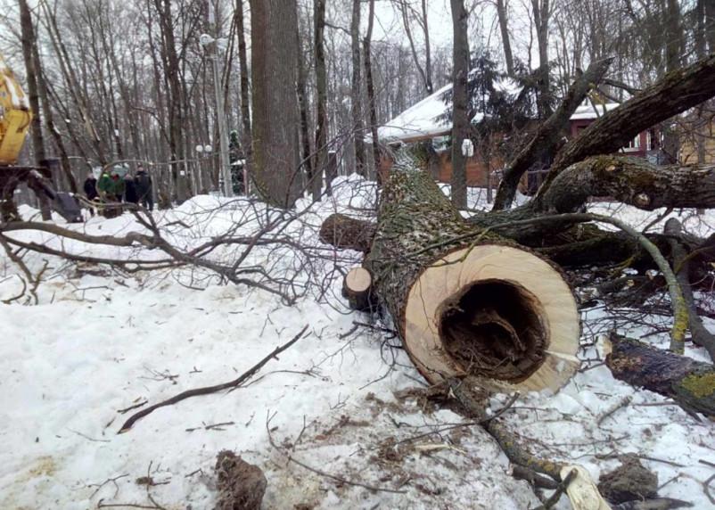 В Смоленске из-за спила деревьев прекратят движение транспорта