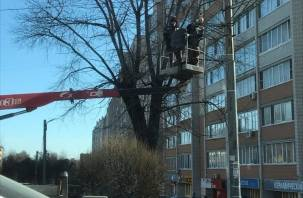 В Смоленске установили новую камеру видеофиксации нарушений