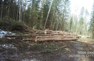 Смолянин незаконно рубил лес. За сохранение деловой репутации пришлось заплатить почти полмиллиона