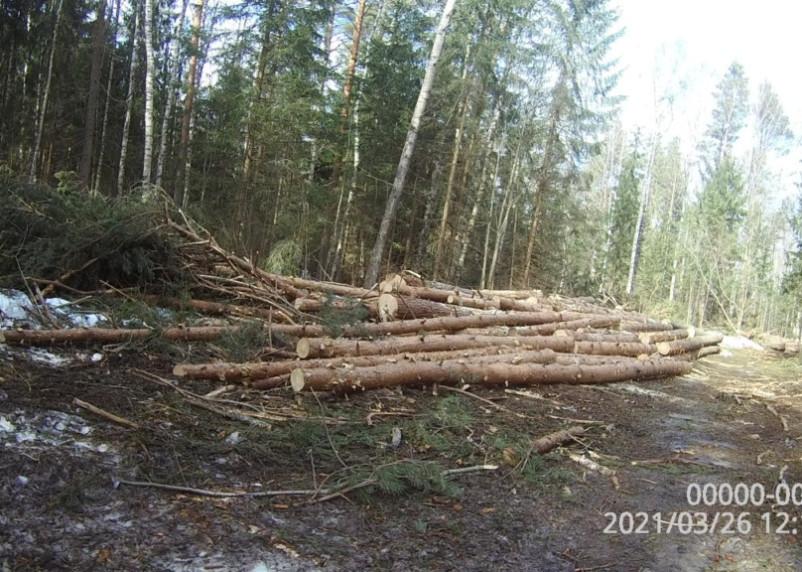Ущерб – более 13 миллионов. В Смоленском районе незаконно вырубили лес