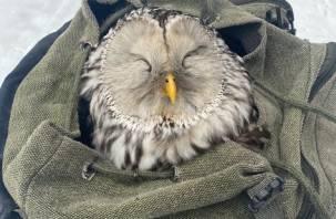 В Смоленске спасли двух сов