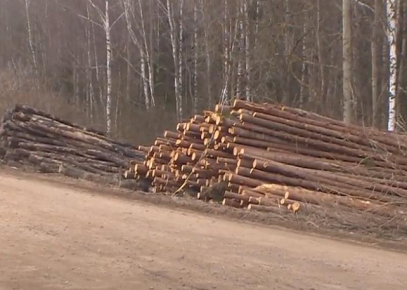 В Смоленской области незаконно вырубили лес на 1,5 миллиона рублей