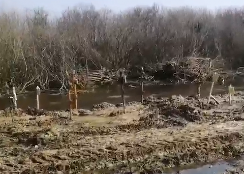 Могилы бездомных и одиноких смолян на кладбище в Селифоново смывает водой