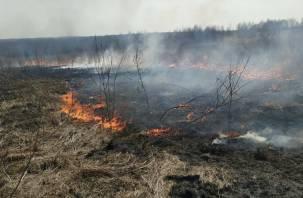 Смоленщина полыхает в огне. Пожары на полях распространяются со скоростью 25 км/ч