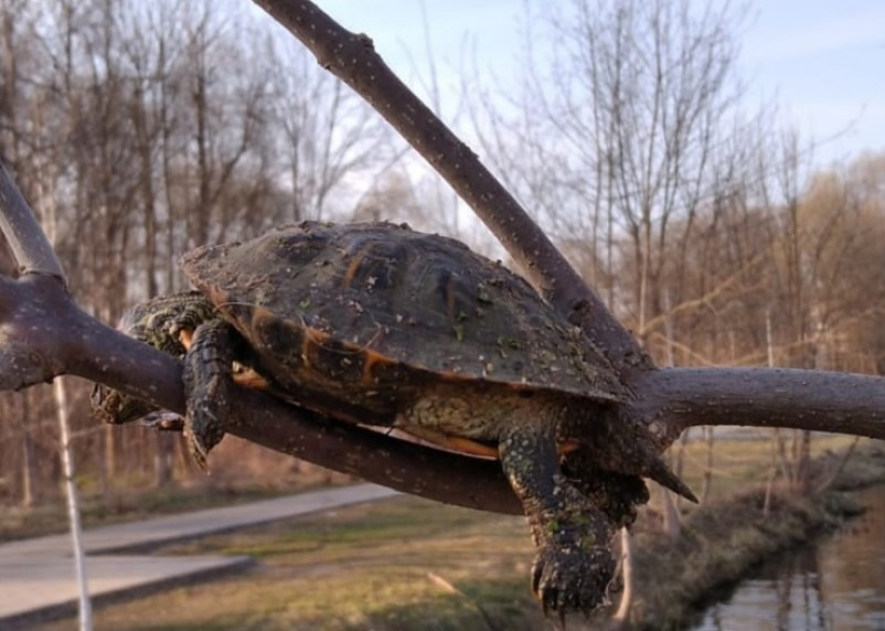 Соцсети: в парке в Гагарине живодеры выкололи глаз черепахе и повесили ее на дерево