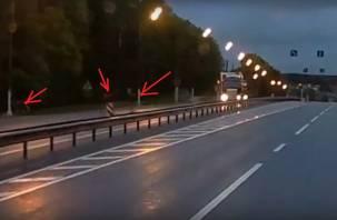 Гуляющие на трассе Смоленской области лоси попали на видео